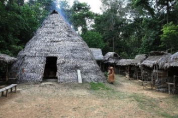 Educational Safari In The Amazon Rainforest Staying In