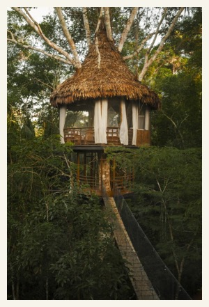 Stay in the Amazon jungle canopy at the unique Treehouse Lodge