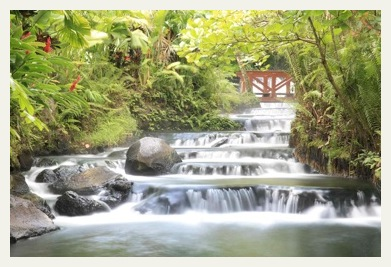 Tabacon Hot Springs Stream Costa Rica Tours